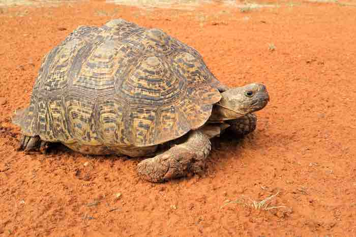 Can a tortoise be potty trained? - TortoiseOwner.com