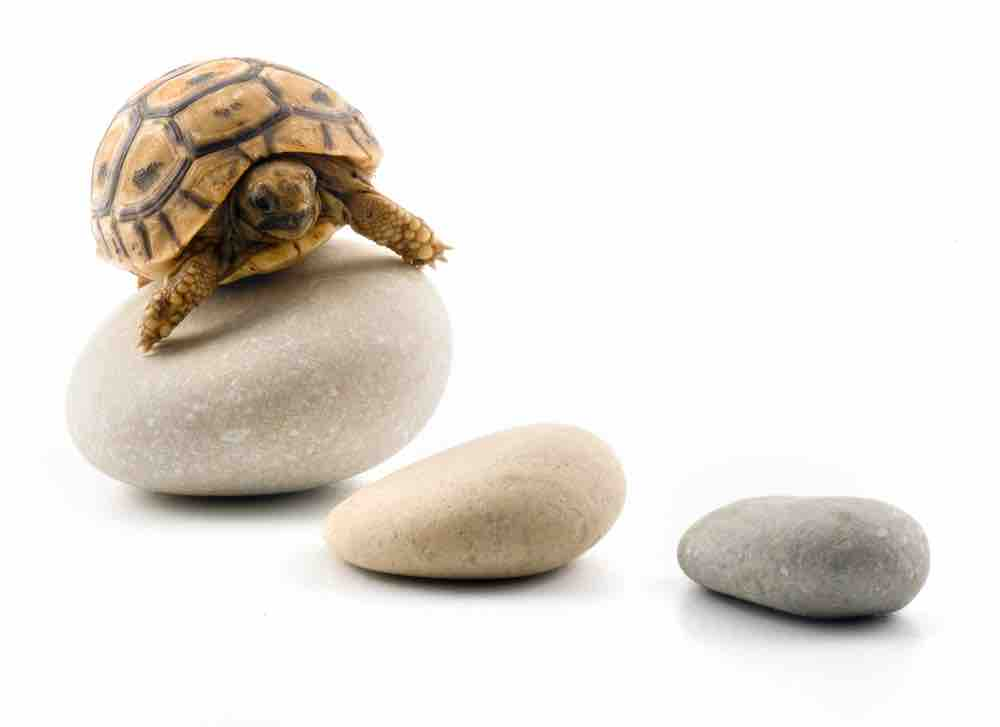 Do pet tortoises need toys? - TortoiseOwner.com
