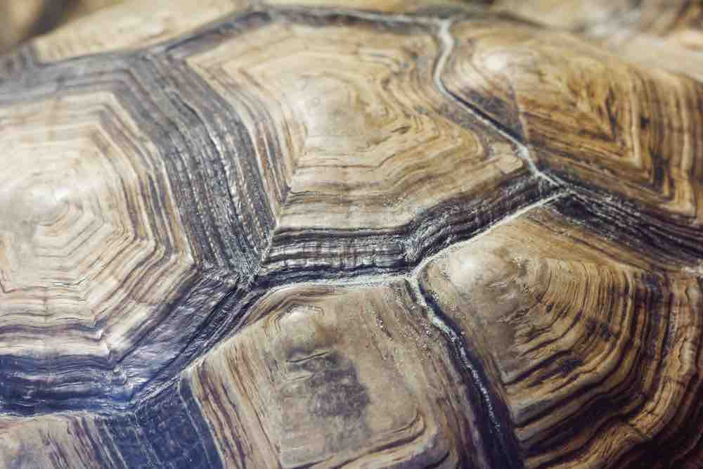 No, you cannot paint that tortoise's shell - TortoiseOwner.com