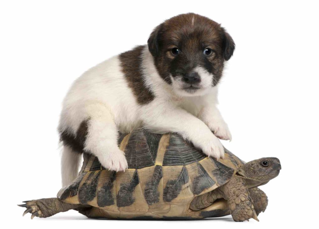 Can Tortoises Live With Other Pets? -TortoiseOwner.com