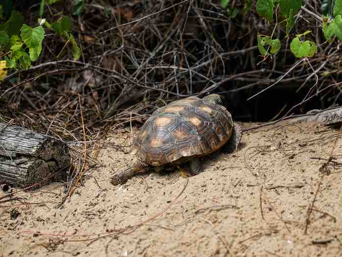Why do tortoises bury themselves? -TortoiseOwner.com
