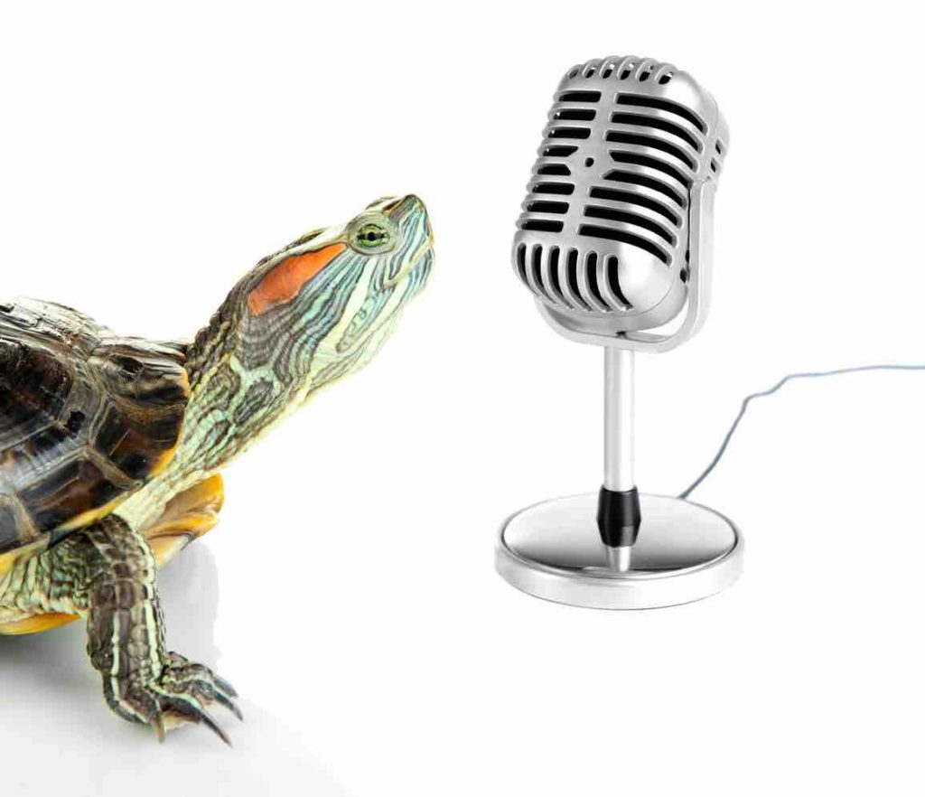 Do Turtles & Tortoises like music? -TortoiseOwner.com