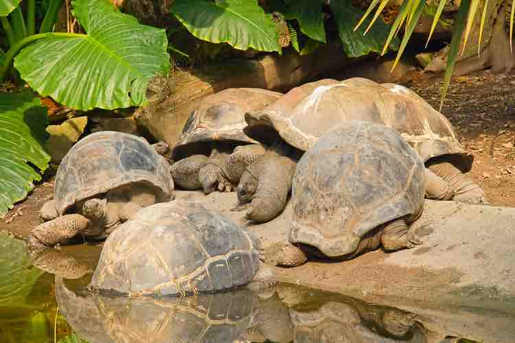 How tortoises communicate: A Guide to Tort Sounds, Scents and Posture