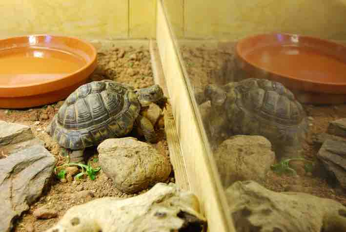 How much space do pet tortoises need? - TortoiseOwner.com