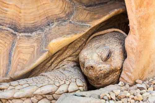 Why Pet Tortoises Die: 10+ Common Causes & How to Prevent
