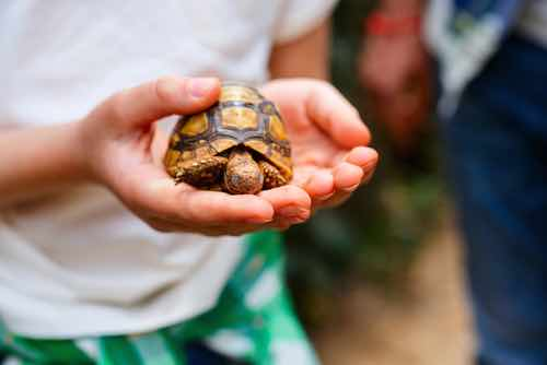Are tortoises safe pets for families? - TortoiseOwner.com