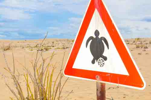 How to tell a tortoise is pregnant (and how to care for a pregnant tortoise)