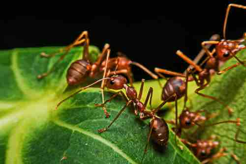 Can Ants Harm Tortoises? - TortoiseOwner.com