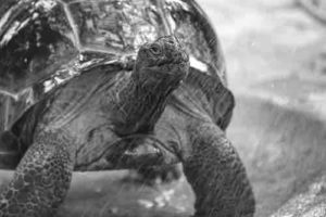 Do tortoises like rain? - TortoiseOwner.com