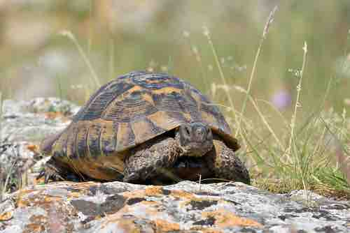Do tortoises show affection? - TortoiseOwner.com