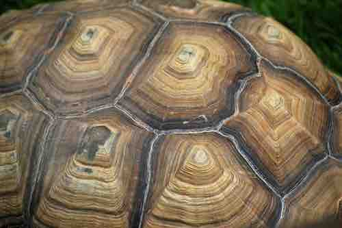 How to wash, bathe and clean a tortoise - TortoiseOwner.com