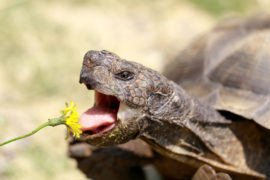 Do Tortoises Smell Bad? A Guide to Pet Tortoises Odours | Tortoise Owner