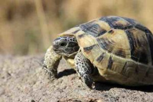 Why (and How) Tortoises & Turtles live so long -TortoiseOwner.com