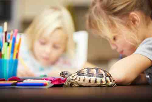 Are tortoises and turtles good classroom pets? - TortoiseOwner.com