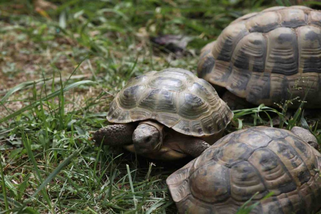 A group of tortoises (a creep) - TortoiseOwner.com