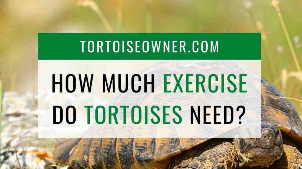 How much exercise do tortoises need? TortoiseOwner.com