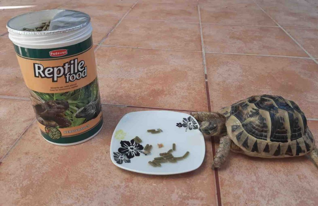 Tortoise food supplement - TortoiseOwner.com