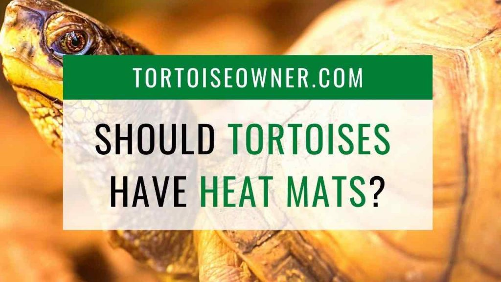 Should tortoises have heat mats? TortoiseOwner.com