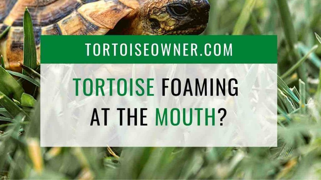 Tortoise foaming at the mouth - TortoiseOwner.com