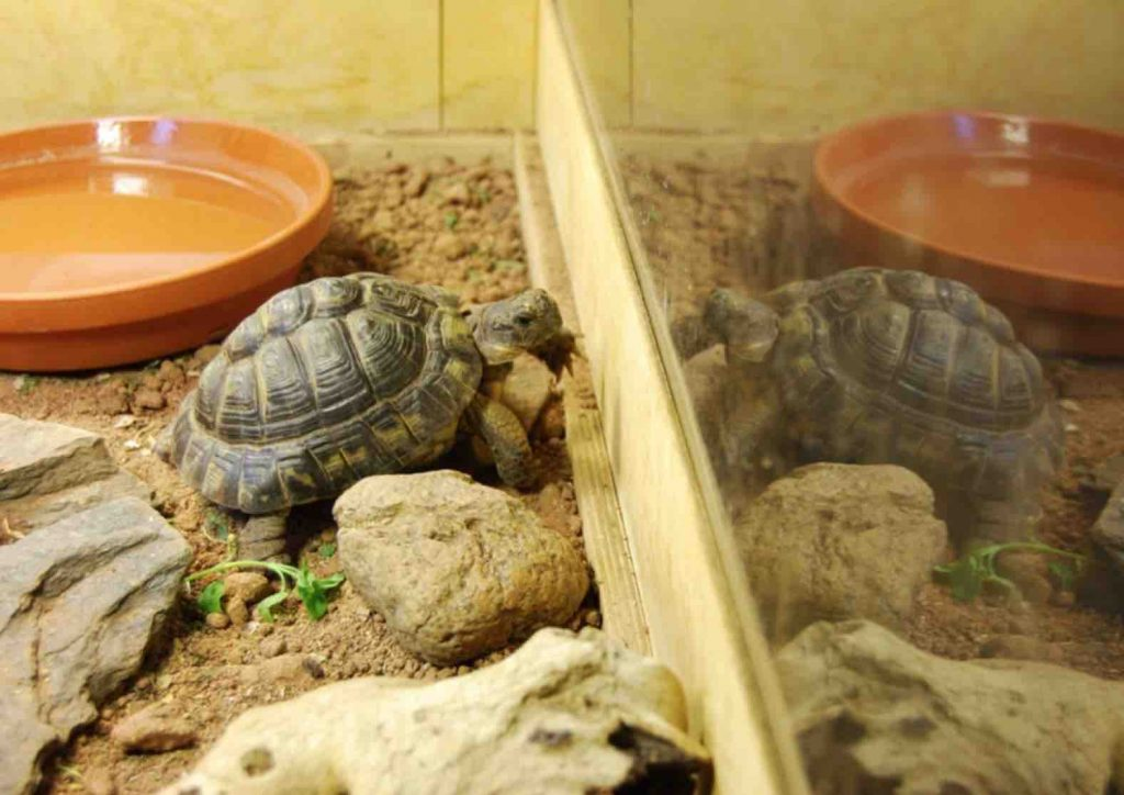 A safe enclosure for tortoise - TortoiseOwner.com