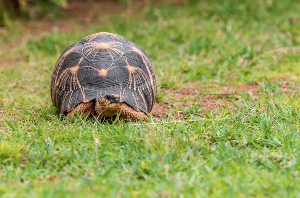 Are tortoises ok with artificial grass? - TortoiseOwner.com