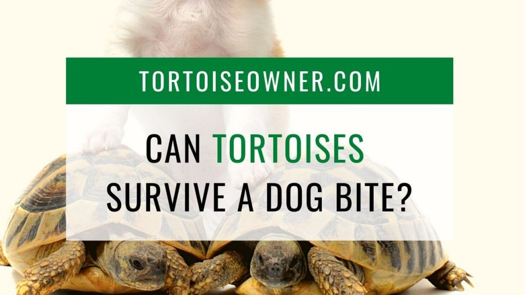 Can a tortoise survive a dog bite? - TortoiseOwner.com