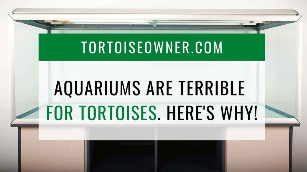 Aquariums are terrible for tortoises - TortoiseOwner.com
