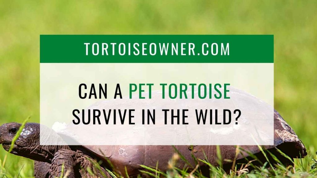 Can a pet tortoise survive in the wild? - TortoiseOwner.com