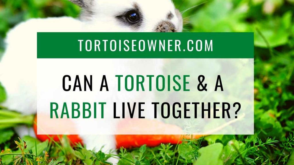 Can a tortoise and a rabbit live together? - TortoiseOwner.com