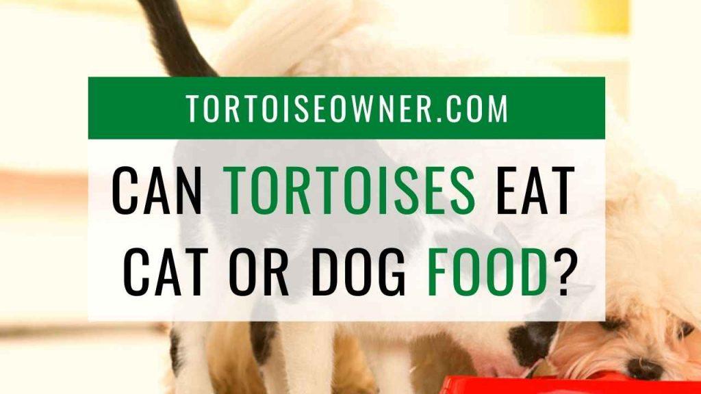 Can a tortoise eat cat or dog food? - TortoiseOwner.com