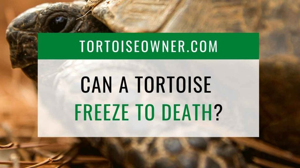 Can a tortoise freeze to death? - TortoiseOwner.com
