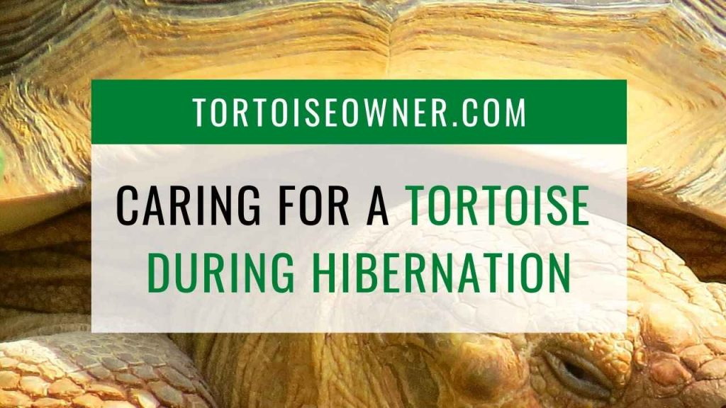 Caring for a tortoise during hibernation - TortoiseOwner.com