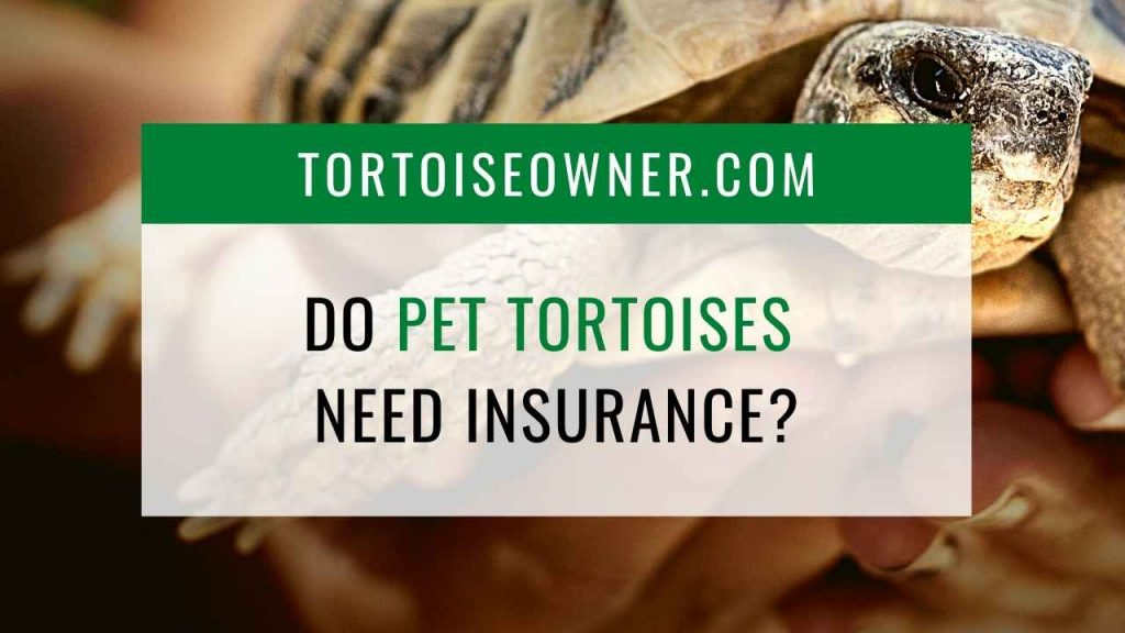 Do pet tortoises need insurance? - TortoiseOwner.com