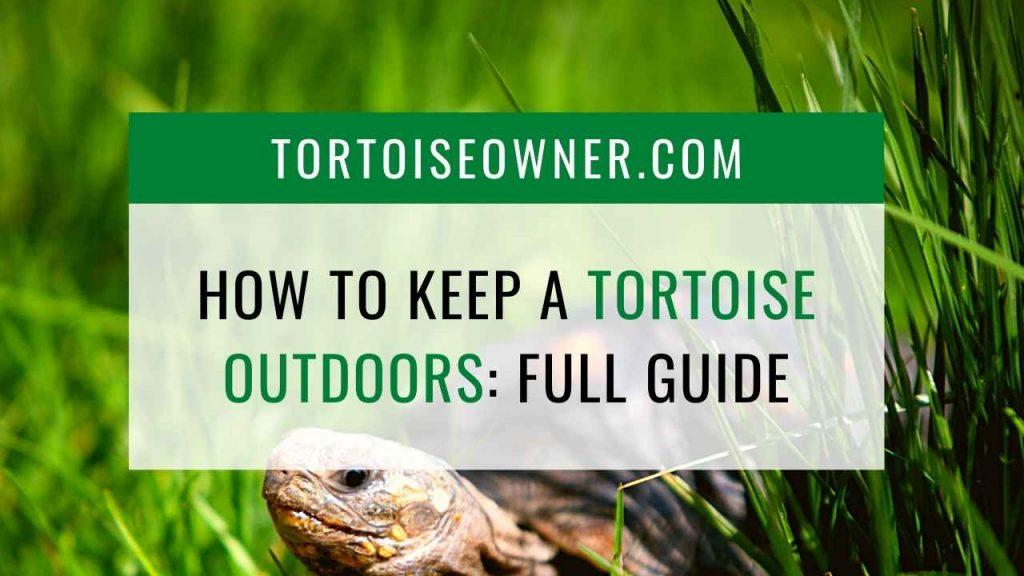 How to keep a tortoise outdoors - TortoiseOwner.com