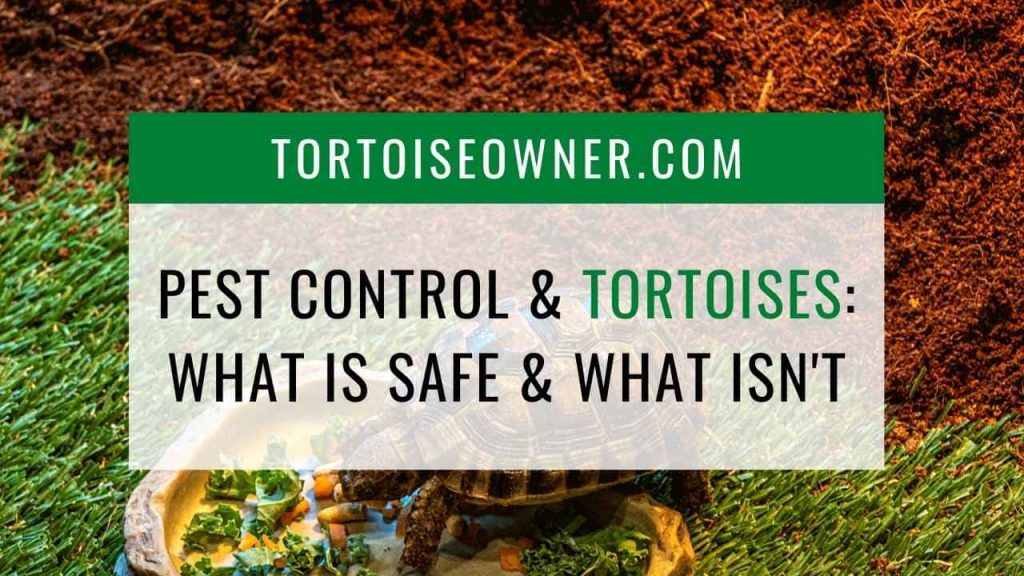 Pest control and tortoises: What is safe and what isn't - TortoiseOwner.com